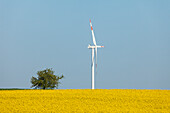 Wind turbine, rapeseed field, bio-energy, renewable energy, near Gunzenhausen, Mittelfranken, Lower Franconia, Franconia, Bavaria, Germany, Europe