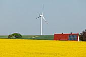 Wind turbines, house with solar cells, photovoltaic cells, rapeseed field, bio-energy, renewable energy, near Gunzenhausen, Mittelfranken, Lower Franconia, Franconia, Bavaria, Germany, Europe