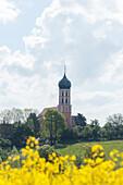 Church with onion shaped tower, rapeseed field, Spielberg near Gunzenhausen, Mittelfranken, Lower Franconia, Franconia, Bavaria, Germany, Europe