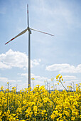 Wind turbines in a rapeseed field, bio-energy, renewable energy, near Gunzenhausen, Mittelfranken, Lower Franconia, Franconia, Bavaria, Germany, Europe