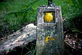 A boundary stone decorated with a yellow scallop shell and an arrow arrow pointing left is displayed in the French Way that leads to Santiago, in Galicia region, Spain. Hundred of thousands pilgrims walk every year to Santiago de Compostela using the Fren