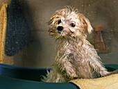 Wet dog in bathroom.