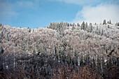Winter mood (white frost) near Bernau in the Black Forest, Waldshut, Baden-Wuerttemberg, Germany