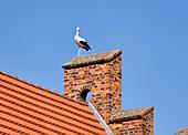 Stork on the Church in Linum, Brandenburg, Germany