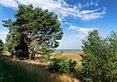 Nature Reserve Guelp Lake, near Prietzen, Brandenburg, Germany