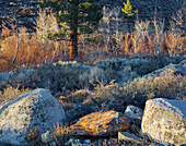 Stones and vegetation in the first light, Sierra Nevada, California, USA