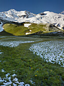 Petersbründl, Glocknergruppe, National Park Hohe Tauern, Salzburg, Austria