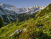 Griessspitzen, Almenrausch, Mieminger Mountains, Tyrol, Austria