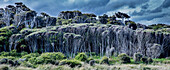 Wald, Naturreservat, Curio Bay, Catlins, Südinsel, Neuseeland