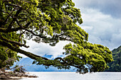 Lake Manapouri, Hope Arm Bay, Fjordland, South Island, New Zealand