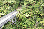 The Bridge to Nowhere, Whanganui River, North Island, New Zealand
