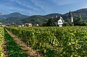 Clos del a Cure, Vineyards ,Aigle,  Lavaux region, Lake Geneva, Swiss Alps,  Switzerland