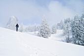 Ski touring off piste in a winter mountain landscape, Kampenwand, Alps, Bavaria, Germany