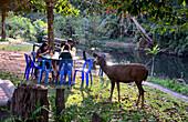 in the Khao Yai National Park, center of Thailand, Thailand