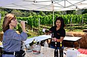 Wine tasting in Vineyard Granmonte Estate at Khao Yai National Park, center Thailand, Thailand