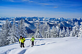 Two persons back-country skiing ascending through winter forest towards Hochries, Mangfall range in background, Hochries, Samerberg, Chiemgau range, Chiemgau, Upper Bavaria, Bavaria, Germany