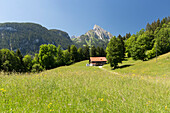 A farm house in a meadow, behind it the summit of Le Rubli, near the villages of Saanen and Rougemont, cantons of Vaud and Bern, Switzerland