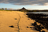 A Galapagos land iguana has left its track on a sandy beach next to some black lava rocks, with the summit of Cerro Dragon or Dragon Hill in the background, Santa Cruz Island, Galapagos Islands, Ecuador