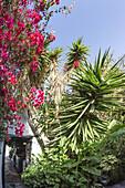 Casa Santa Maria, Patio, Flowers, Betancuria, Fuerteventura, Canary Islands, Spain