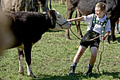 Boy wearing traditional clothes pulling the rope of a cattle, Allgau, Bavaria, Germany