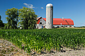 Farm with cornfield, blue sky, Province Quebec, Canada