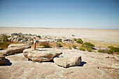 Woman standing on a rock while looking over salt desert, Kubu Island, Makgadikgadi Pans National Park, Botswana