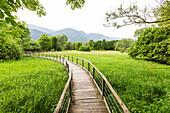 Holzsteg im Schilf, Idrosee, Baitoni, Trentino, Italien