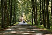 Avenue of beech trees leading to Surenburg castle , Hoerstel-Riesenbeck , Muensterland , North Rhine-Westphalia , Germany , Europe