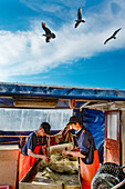 Fishermen sorting their catch, Hanseatic City, Luebeck Travemuende, Baltic Coast, Schleswig-Holstein, Germany