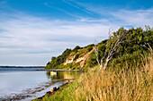 Holnis Kliff, Halbinsel Holnis, Flensburger Förde, Angeln, Ostsee, Schleswig-Holstein, Deutschland