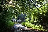 track in forest, backlit, Bavaria, Germany