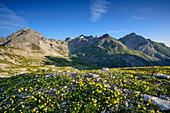 Meager alpine vegetation with Vorderseespitze, Feuerspitze and Fallenbacherspitze in background, Lechtal Alps, Tyrol, Austria