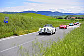 Oldtimer on a road, Jaguar in front, Mille Miglia, 1000 Miglia, 2014, San Quirico D´orcia, Siena, Tuscany, Italy, Europe