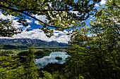 Trees overlooking mountains and still lake in rural landscape, Bled, Bled, Slovenia