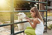 Caucasian girl petting goat at farm, Charlevoix, Michigan, USA