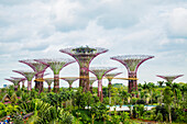 Electric Supertrees, Singapore, Republic of Singapore, Singapore, Republic of Singapore, Republic of Singapore