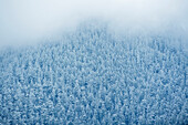 Aerial view of snowy trees, Seattle, washington, USA