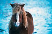 Horse standing in snowy field, C1