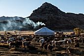 Livestock grazing in nomadic campsite in remote landscape, Ulgii, Bayan Ulgii, Mongolia