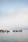 Wooden poles in ocean under cloudy sky, Edmonds, Washington, USA