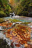 France, Aquitaine, Pyrenees Atlantiques, Fallen leaves collected in rock pots along Bious river in Ossau valley