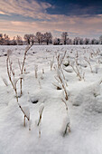 France, Aquitaine, Pyrenees, Atlantiques, Stems and snow-covered field at sunset