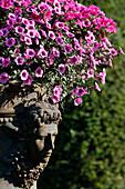 Bowl of flowers. Saint-Sauveur-en-Puisaye. France.