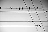 Birds Sitting on Wires with Geometric Pattern, Low Angle View