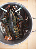 Uncooked Lobsters in Pot, High Angle View