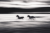 Blurred Galloping Horses