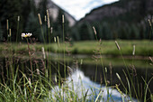 Tall Grass with Lake and Mountain in Background, Selective Focus