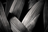 Palm Leaves, Abstract