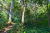 woman hiking through djungle in northern Thailand