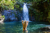 A woman with curly blonde hair bathing in a natural pool while looking at a waterfall in Belize.